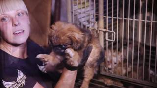 Operation Dog Days of Summer (Mini-documentary)