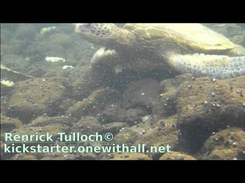 Hilo, Hawaii's hidden/unknown turtle hideouts (underwater video)