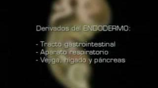 Matias Reproducción Humana  Fecundación al Parto parte 2ª  01
