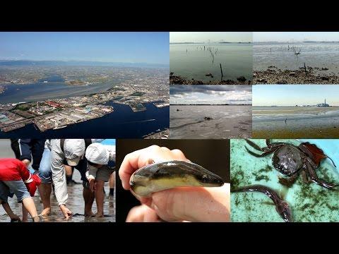 藤前干潟と保全活動