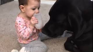 Cute Babies & Funny Dogs