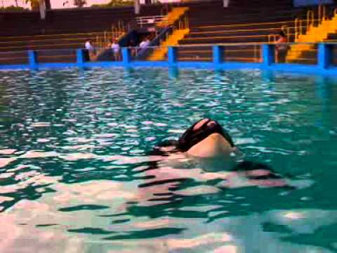 A Few Minutes with Orca Lolita on the 40th Anniversary of Her Brutal Capture