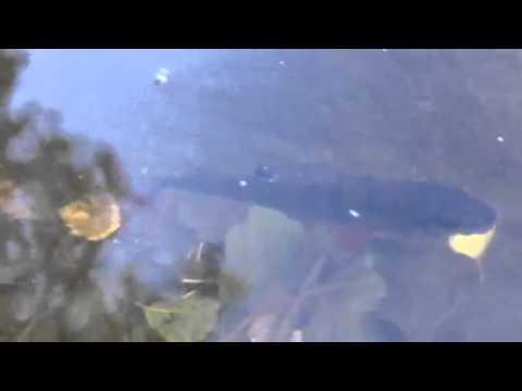 Рыбалка на озере УЛОВ