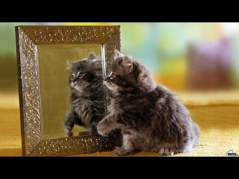 смешные кошки и коты в зеркалах