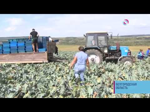 Социальный репортаж: В Белгородской области агроном создала с нуля успешное фермерское хозяйство