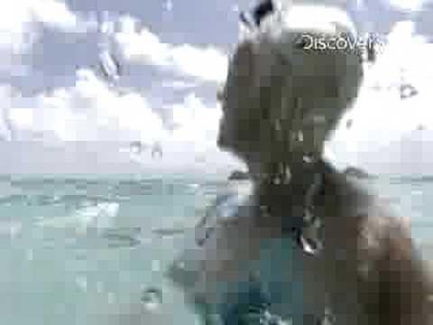 Shark Week- Tiger Shark Attack: Beyond Fear