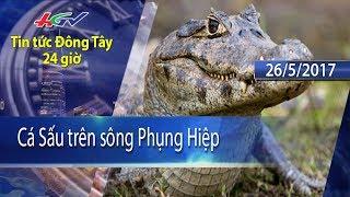 HGTV | Tin tức Đông Tây 24 giờ: Cá Sấu trên sông Phụng Hiệp - 26/5/2017