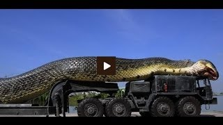 The truth about giant anaconda in the Amazon