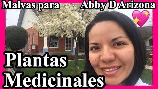 Plantas Medicinales 😍 | Buscando Malvas para mi hermana Abby D Arizona 💖