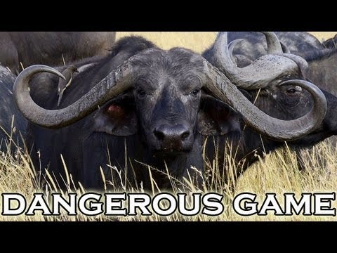 hunting-dangerous-game-in-mozambique.html