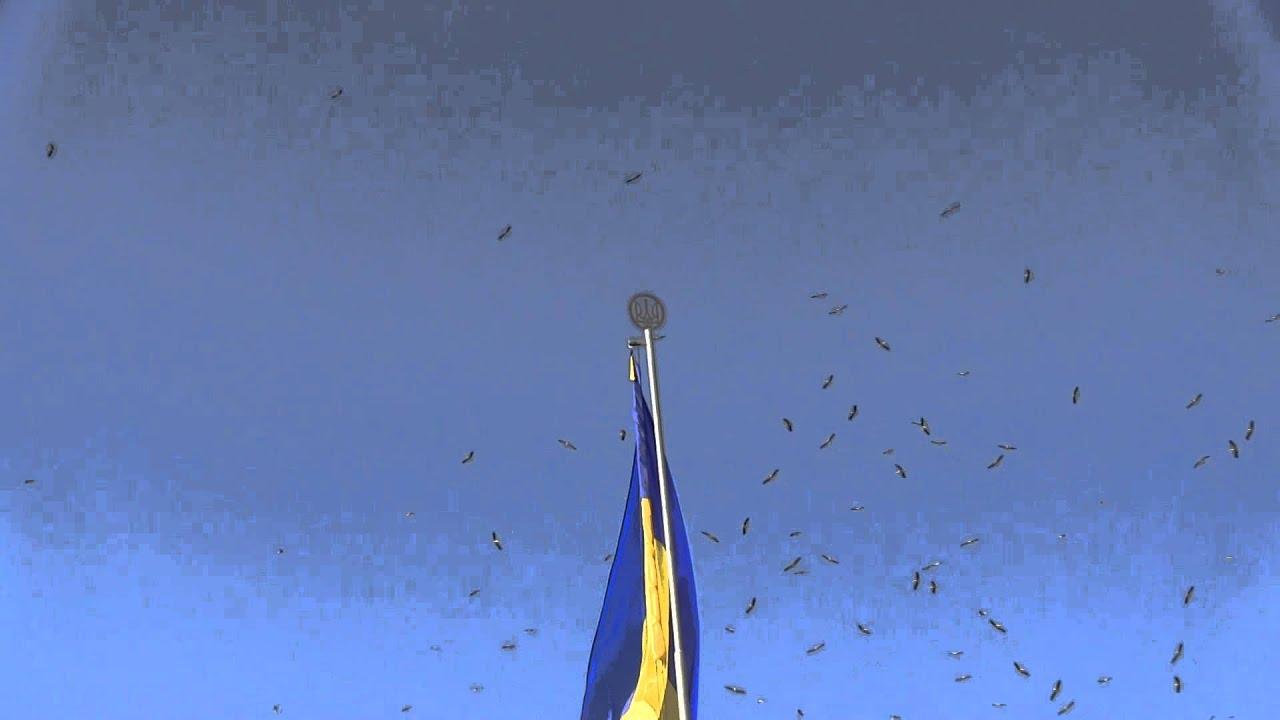 На День Незалежності над Калушем літали лелеки
