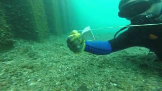 Port Huron Michigan Diving.  9/4/14