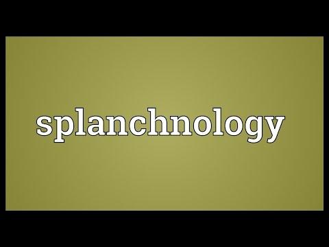 Header of splanchnology