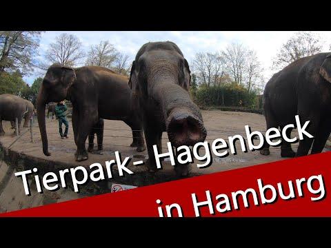 Tierpark - Hagenbeck in Hamburg / Elefant - Tiger und Giraffe kann man hier sehen