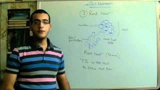Biology - Chapter 1 - Nutrition - part 2 (Root hairs)  - Abdallah Reda el Sayed