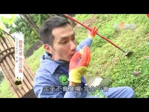 台灣-作客他鄉-EP 184-熊貓的故鄉-四川成都