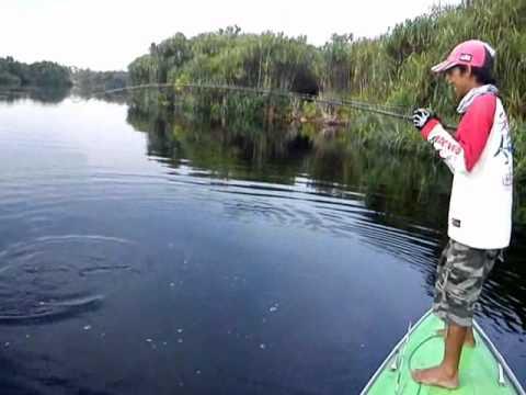 Borneo River Snake Borneo Sebangau River 2012