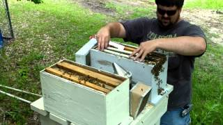 Bees N Stuff - splitting and stacking boxes