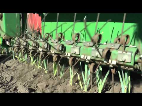 Weedingmachine 9 rows