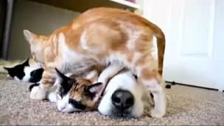 Hài động vật - cười với những trò nghịch của thú cưng