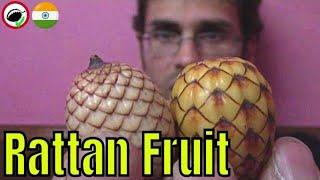 Rattan Palm Fruit Review - Weird Fruit Explorer Ep. 310