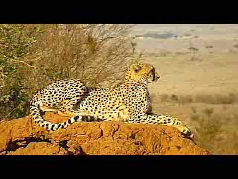 Safari Kenya Africa