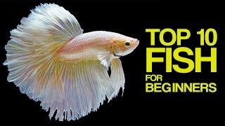 Top 10 Aquarium Fish for Beginners