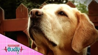 Operation Ouch - Adorable Puppy Can Smell Insulin! | Science for Kids