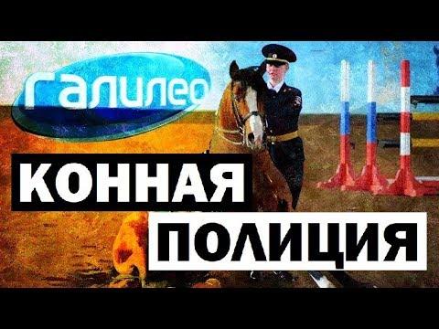 Галилео. Конная полиция 🐎👮 Mounted police