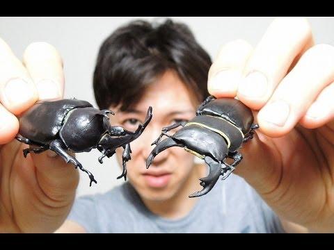 ひくほどリアル!昆虫ハンター リアルアンパンマン 動画