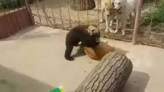 Wrestling Style - Khabib Nurmagomedov