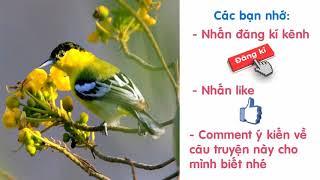 Audio Truyện Truyện Cổ Tích Việt Nam   Sự Tích Chim Hít Cô
