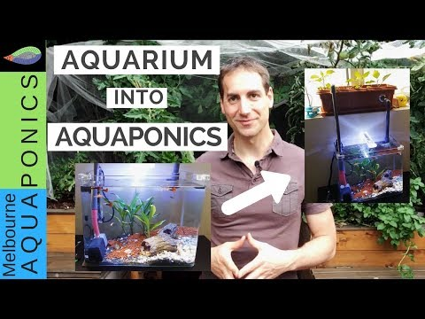 Aquarium into Aquaponics
