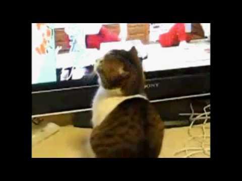 Incroyable un chat qui fait peur youtube for Chambre qui fait peur
