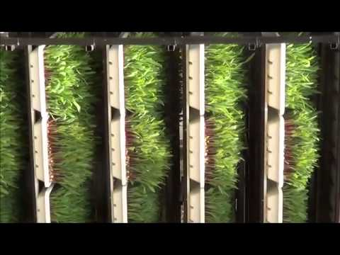 Watch Streaming  fodder machine navsari agricultural university Movies Online
