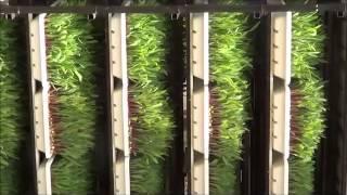 FODDER MACHINE -NAVSARI AGRICULTURAL UNIVERSITY