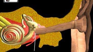 Ear Anatomy | Inside the ear | 3D Human Ear animation video | Biology | Elearnin