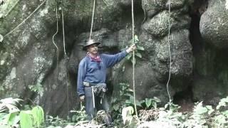 The Giant Lupuna Teacher Tree of the Amazon (I)