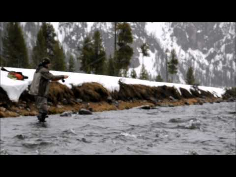 Fly Fishing Frenzy | Madison River fly fishing, Dave Hancey caught 7 fish on 12 casts