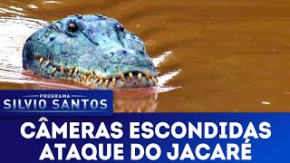 Ataque do Jacaré - Crocodile Attack Prank | Câmeras Escondidas (24/03/19)