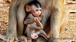 Look like baby Sweet Pea, Very adorable baby monkey, You look like Sweet Pea