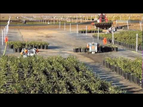 Harvest Automation's HV-100 robots space plants at Altman Plants in CA