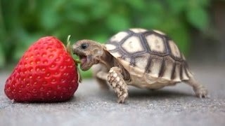 Turtle / Tortoise - A Funny Turtle And Cute Turtle Videos Compilation || NEW HD