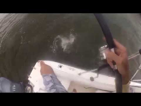 Tampa Bay grouper digging and snapper fishing
