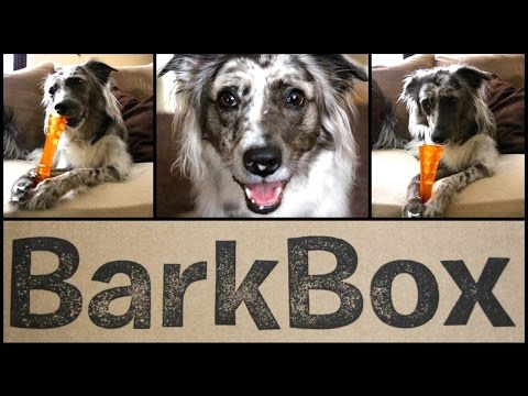 ★BarkBox★ Open Box Ruff-view w/ Guest Star BRISBANE!