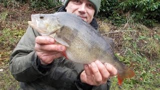 Staffs/Worcs Canal PB perch and brook pioneering (February 2015)