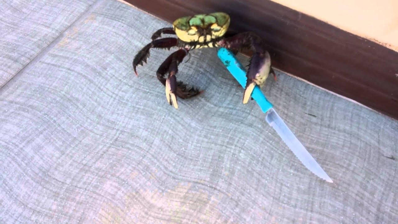 Vajazó kést lóbál egy rák - hihetetlen videó!