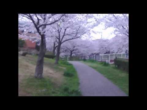 Sakura And Hanabi