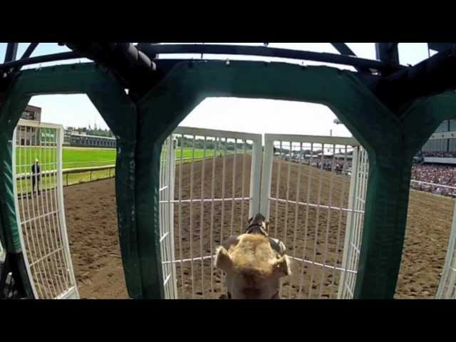 Helmet Cam Camel Race at Canterbury Park with Shakopee Mayor Brad Tabke