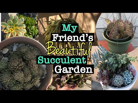 My Friend's Succulent Garden Tour| 1-2-18